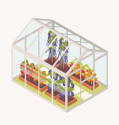 vegetables growing in boxes with soil inside glass vector image