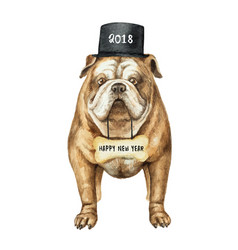 Watercolor english bulldog with black vector