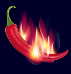 Pepper on fire on a dark vector image