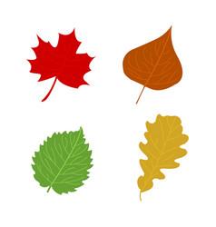 cartoon flat autumn leaves vector image