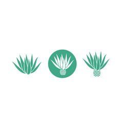 blue agave vector image