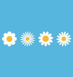 Camomile round icon set white daisy chamomile vector