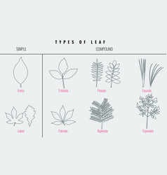collection for types of leaf with trendy line art vector image