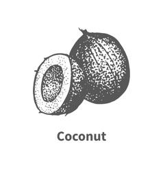Doodle sketch hand-drawn coconut vector image