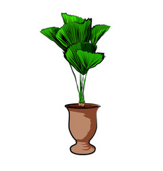 palm in a clay pot element home decor the vector image