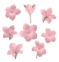 Plumeria pudica flower set vector