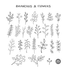 set of branches hand drawn vector image