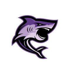 Shark logo design sharks logo for a club or vector