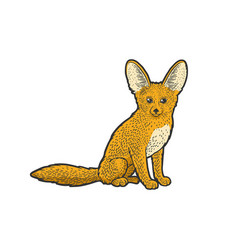 fennec fox sketch vector image