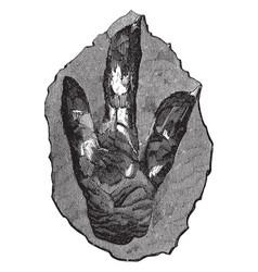 Footprint of brontozoum giganteum vintage vector