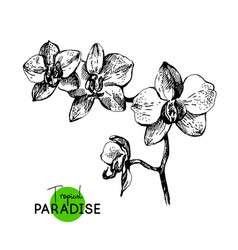 hand drawn sketch tropical paradise plant orchid vector image