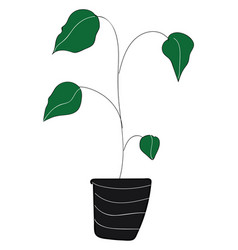 houseplant with big green leaves color on white vector image