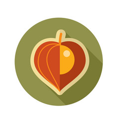 Physalis berries flat icon vegetable vector
