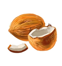picture of coconut vector image