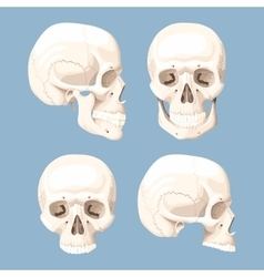 Set of human skulls vector