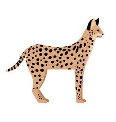Wild cat with spots vector