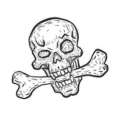 Skull with bone vector image