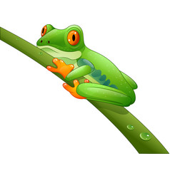 Cartoon red-eyed amazon on branch vector