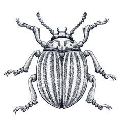 colorado potato beetle tattoo art potato bug vector image
