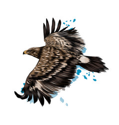 flying steppe eagle from a splash watercolor vector image