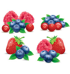 Forest fruits raspberry strawberry blueberry vector
