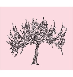 Hand drawn Sakura with blossom in line style vector image