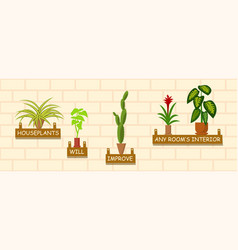 horizontal template with houseplants on a wall vector image