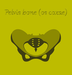 Human organ icon in flat style pelvic bones vector