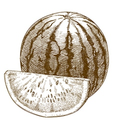 engraving watermelon and slice vector image