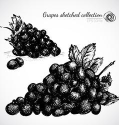 Grape hand drawn vector image