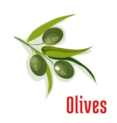 Olive branch with olives vegetable icon vector