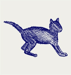 Frightened kitten vector image