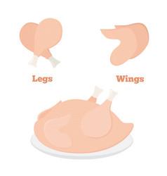 Fresh chicken parts - wings legs tasty fast food vector