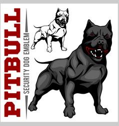 American pit bull terrier pitbull vector
