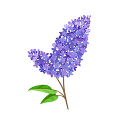 Double branch blue lilac vector