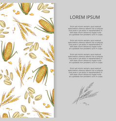 Hand drawn cereals corn wheat banner design vector