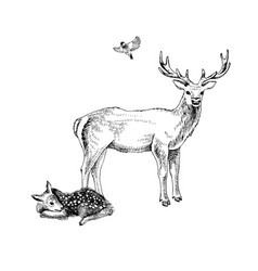 hand drawn deer familie vector image
