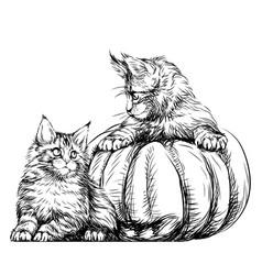 little kittens vector image
