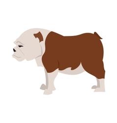 English bulldog breed vector image vector image