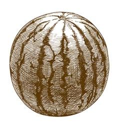 engraving watermelon vector image vector image