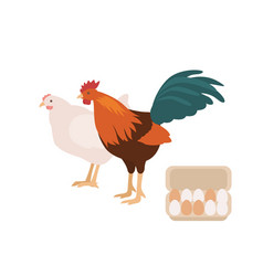 cute cock chicken and carton or box full eggs vector image