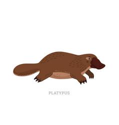 Rare animals collection platypus ornithorhynchus vector