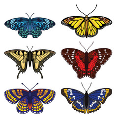 set with butterflies isolated on white background vector image