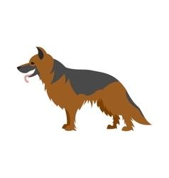 German shepherd dog vector image