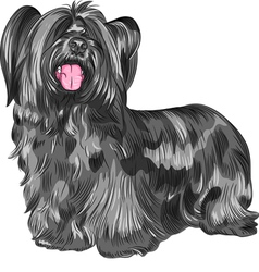 Funny shaggy smiling dog Skye Terrier breed vector