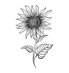 Sunflower Sketch Vector Images Over 1 700