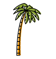 Tree palm isolated vector