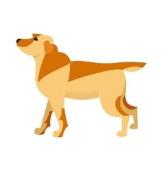 Labrador retriever dog breed vector