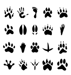Collection 20 animal and human footprints vector