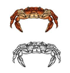 crab sketch of sea animal crustacean seafood vector image